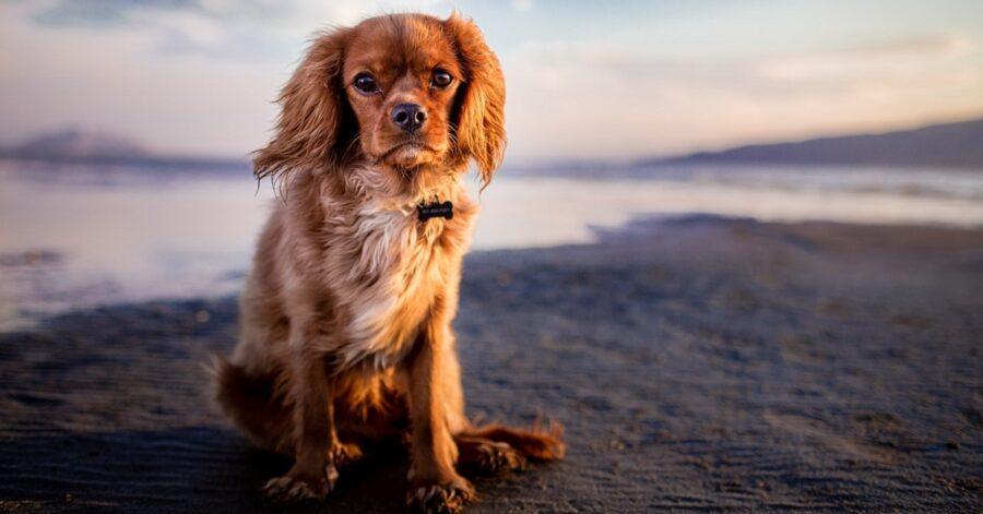 Chi chiamare se si trova un cane abbandonato