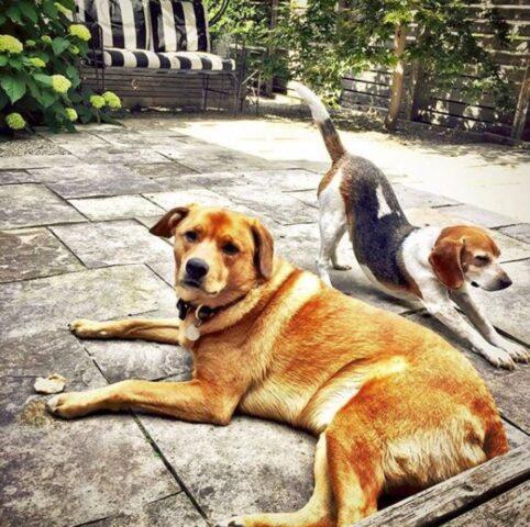 Meghan-Markle-cani-adottati