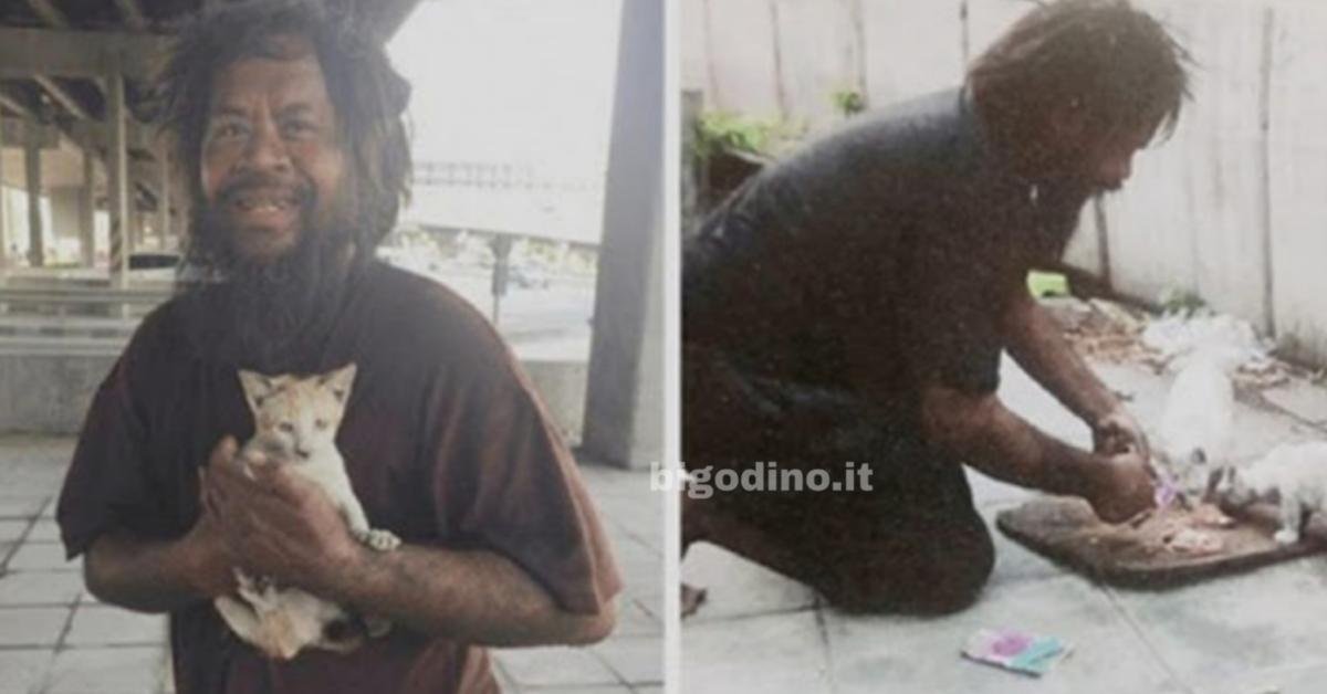 senzatetto gatti