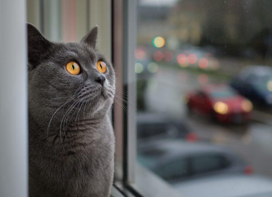 finestre per gatti