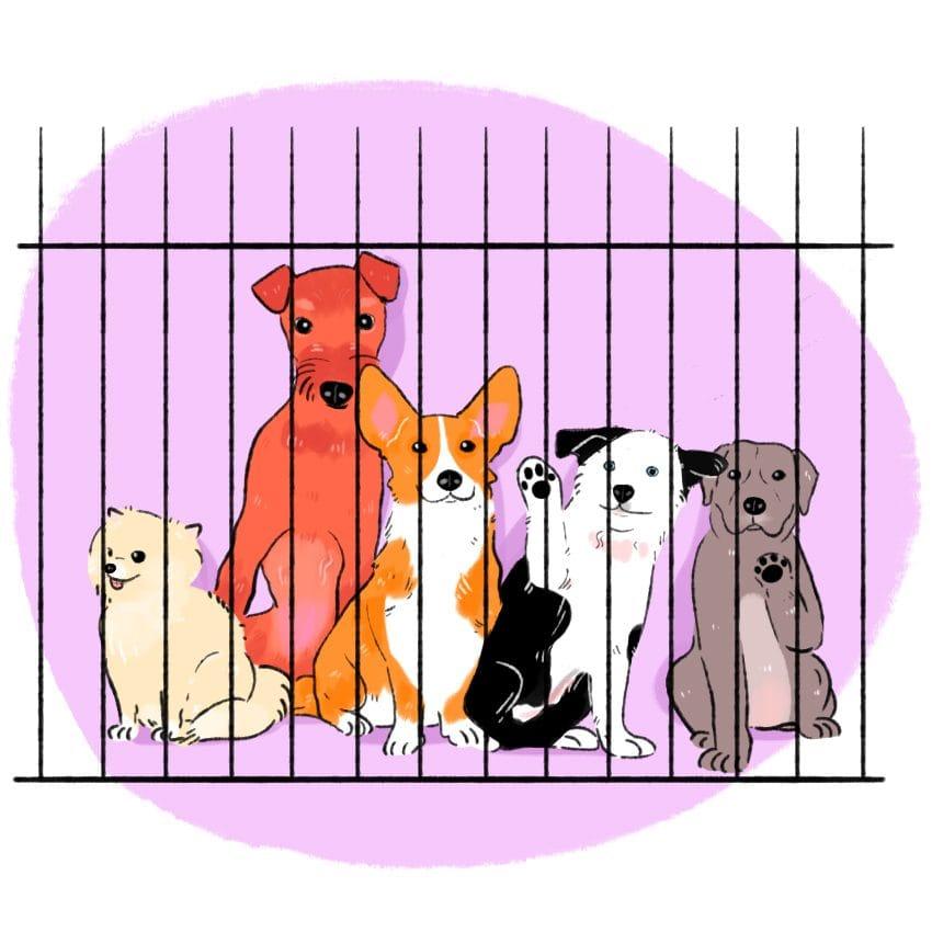 Sterilizzazione e castrazione dei cuccioli di cane
