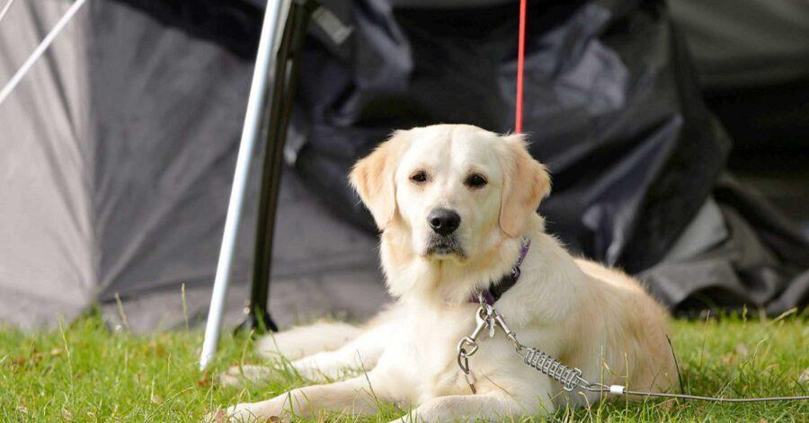 Vacanze con il cane in campeggio