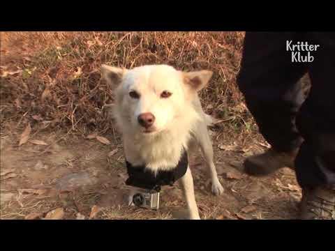cagnolina-telecamera