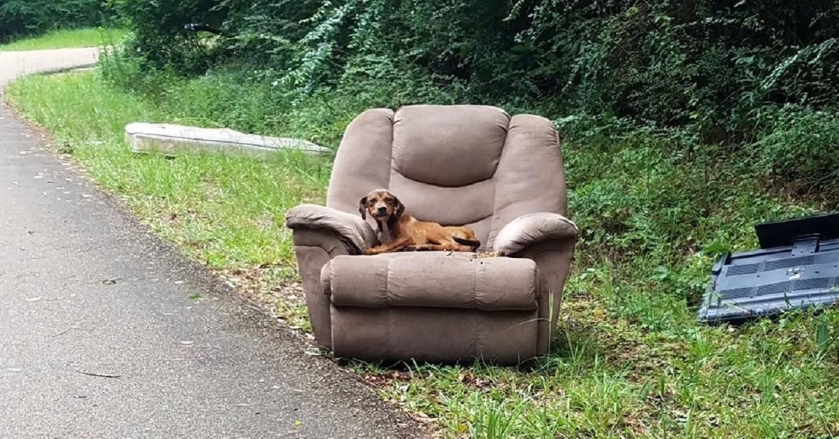 cane-abbandonato-poltrona-strada