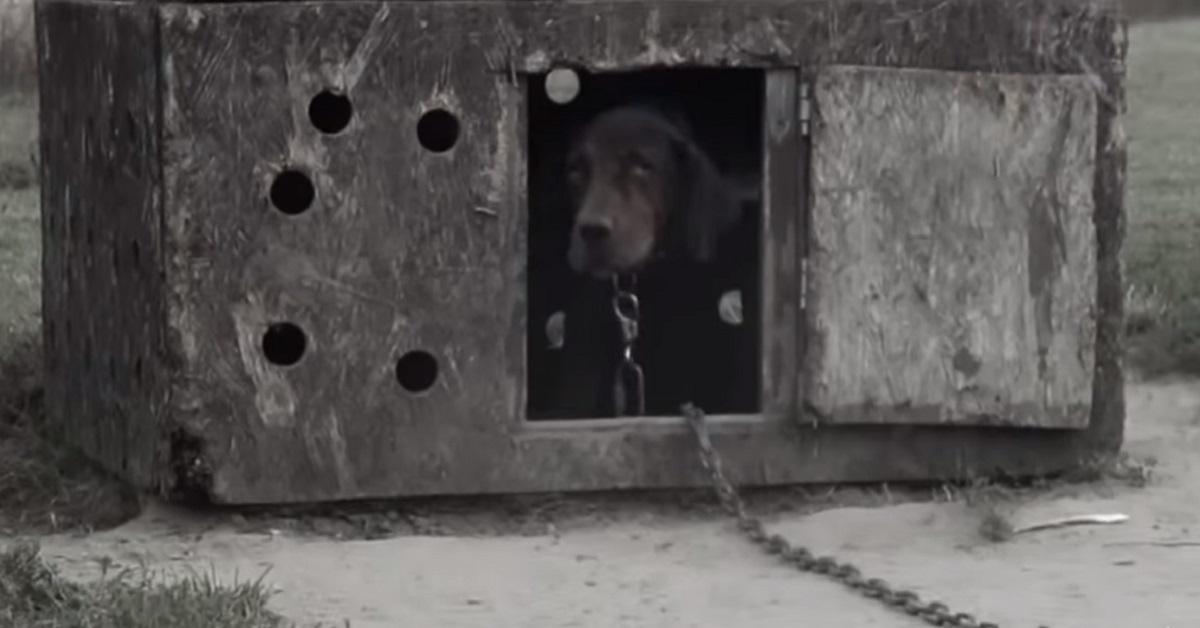 Il cane trascurato che non aveva mai avuto una coccola