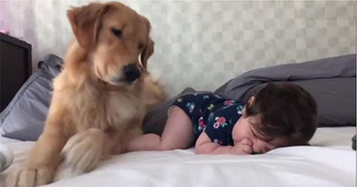 cane-e-neonata