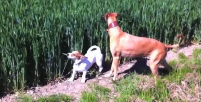 Cane corre come un canguro