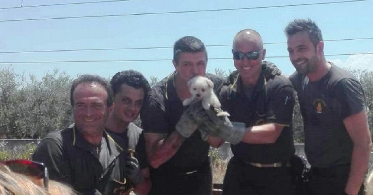 cucciolo-vigili-del-fuoco-terlizzi