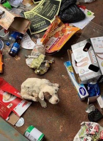 il-cucciolo-abbandonato-nel-secchio-della-spazzatura