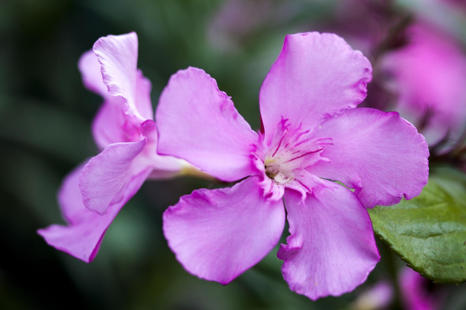 fiori che fioriscono tutta l estate