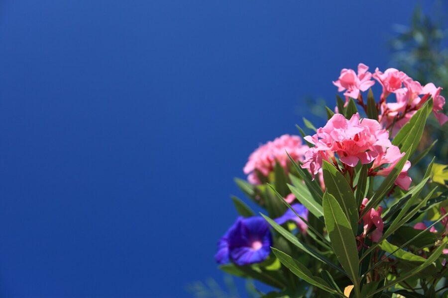Piante che fioriscono