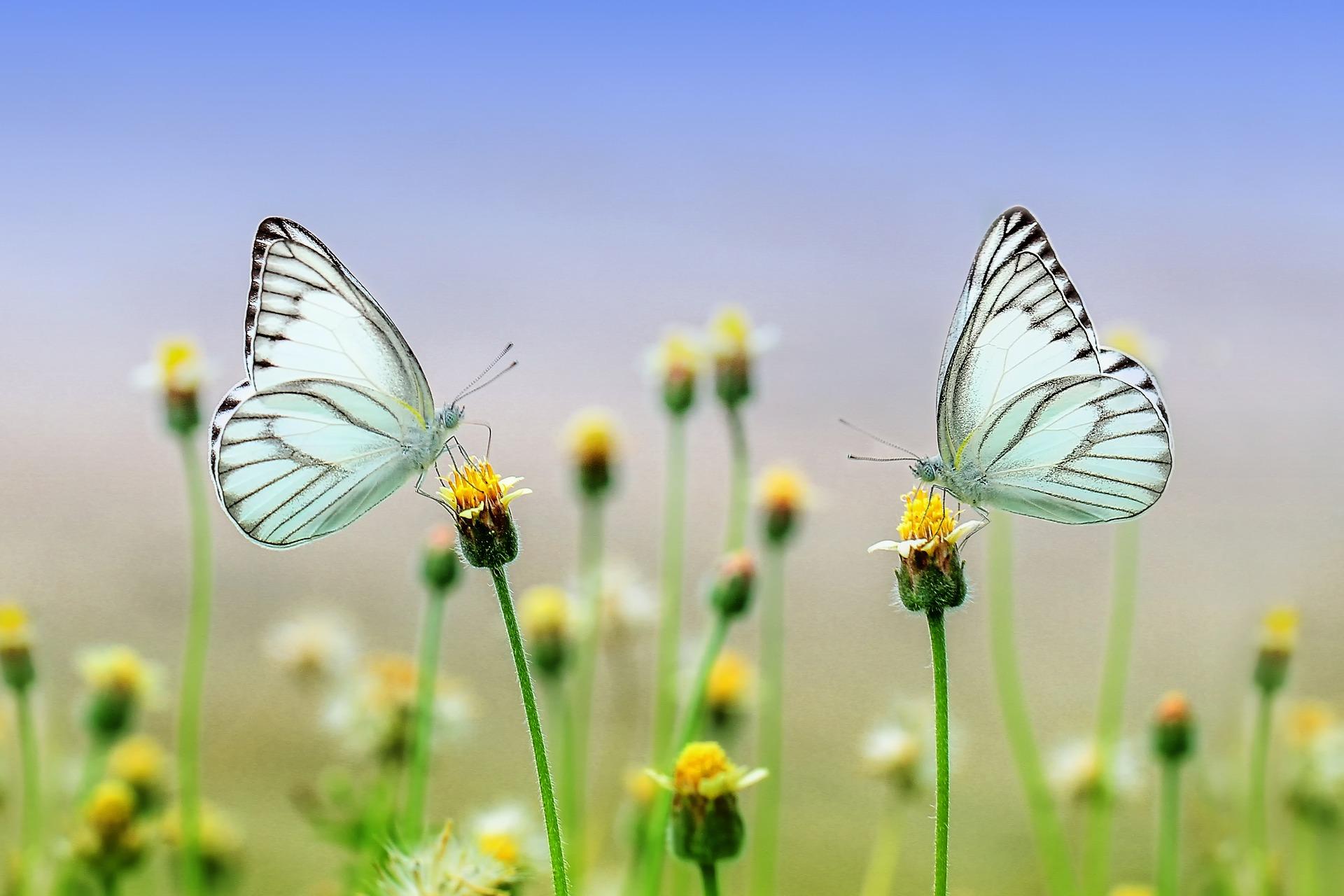 Le più belle frasi sulla bellezza della natura