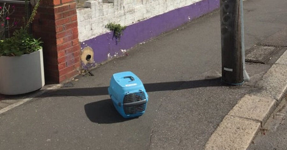 gatto-abbandonato-trasportino