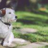 giardino-sicuro-cani