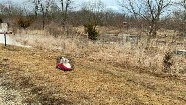 i-cagnolini-abbandonati-vicino-al-lago 1