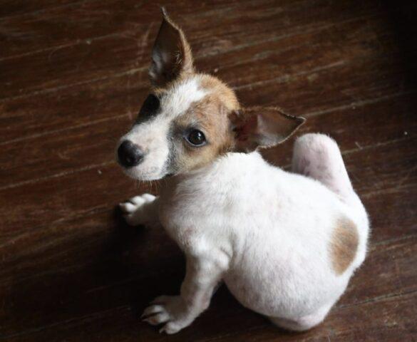 la-storia-di-un-cucciolo-chiamato-Snafu 2