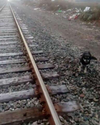 il-cane-legato-su-i-binari-del-treno 1