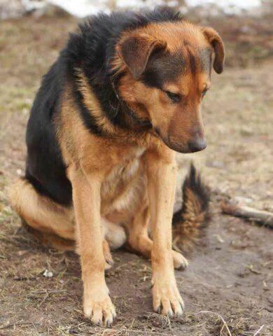 Luke-il-cane-che-ha-aspettato-il-ritorno-del-suo-amico-umano-per-giorni