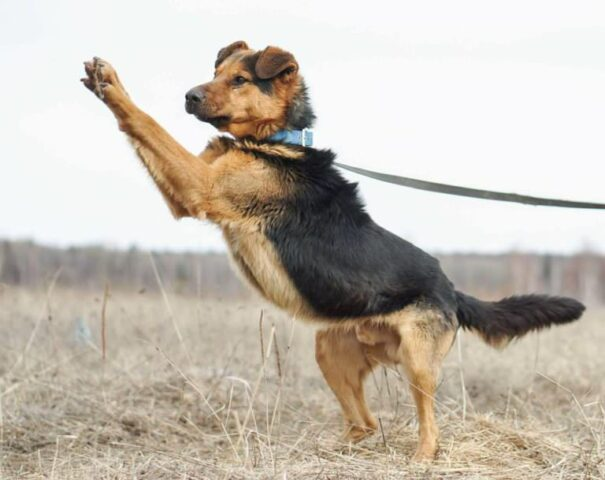 Luke-il-cane-che-ha-aspettato-il-ritorno-del-suo-amico-umano-per-giorni 1