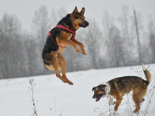 Luke-il-cane-che-ha-aspettato-il-ritorno-del-suo-amico-umano-per-giorni 2