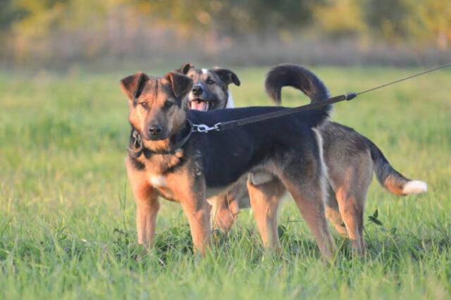 Luke-il-cane-che-ha-aspettato-il-ritorno-del-suo-amico-umano-per-giorni 3