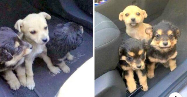 i-cuccioli-trovati-sul-ciglio-della-strada-soli-tristi-e-spaventati