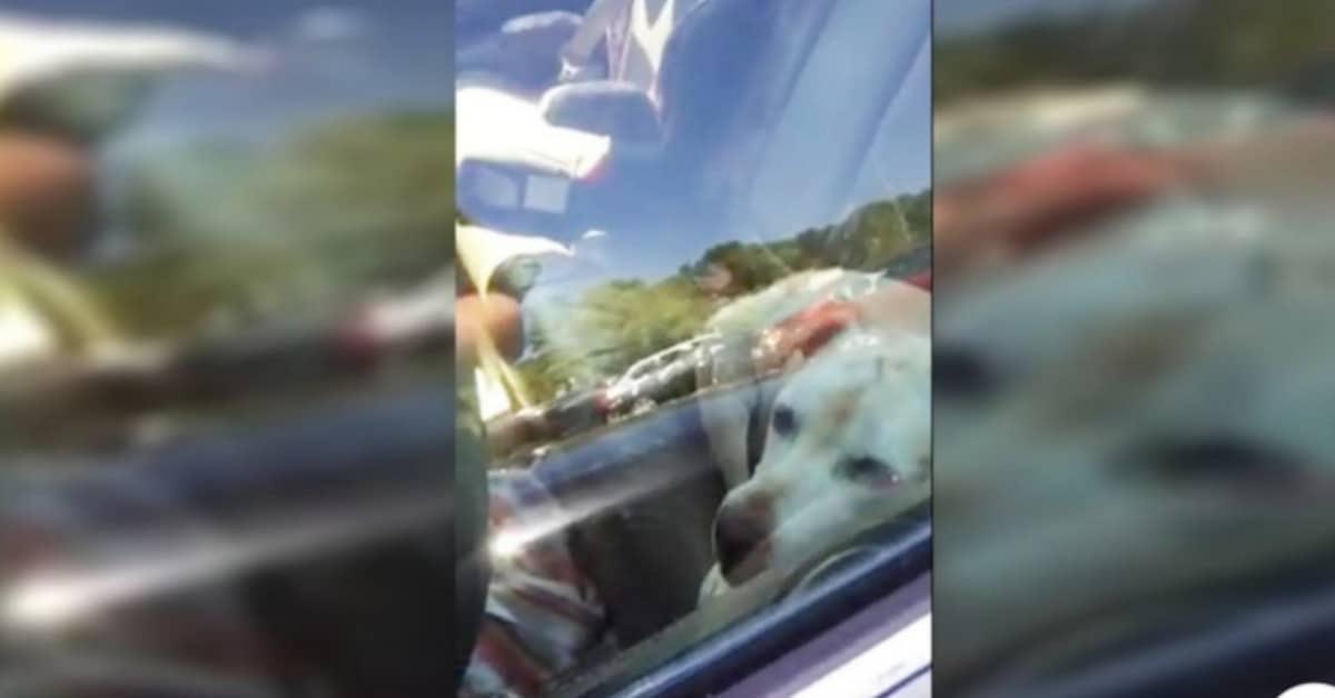 trovati-due-cani-in-due-auto-diverse-nello-stesso-parcheggio-sotto-il-sole-cocente