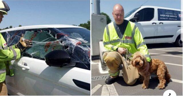 Bertie-era-chiuso-in-macchina-ma-i-Vigili-del-fuoco-prendono-una-decisione-rapidamente-per-salvargli-la-vita