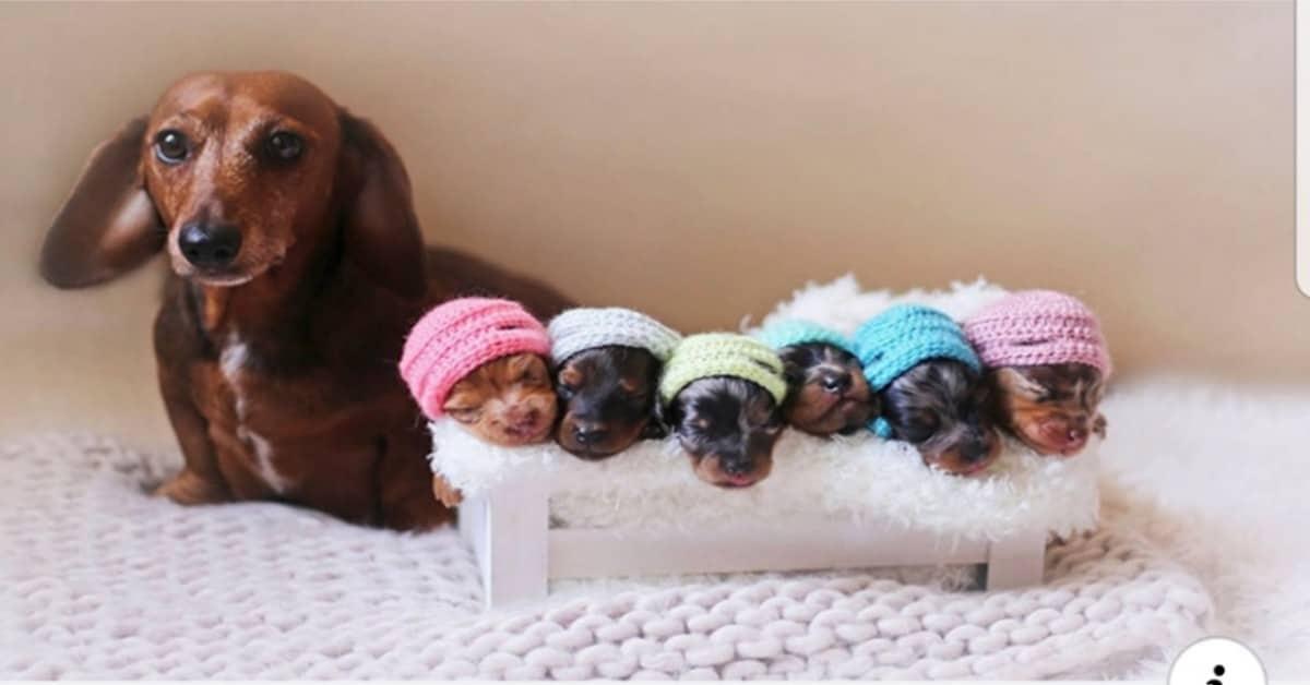 il-servizio-fotografico-della-cagnolina-e-dei-suoi-cuccioli-che-ha-fatto-il-giro-del-mondo