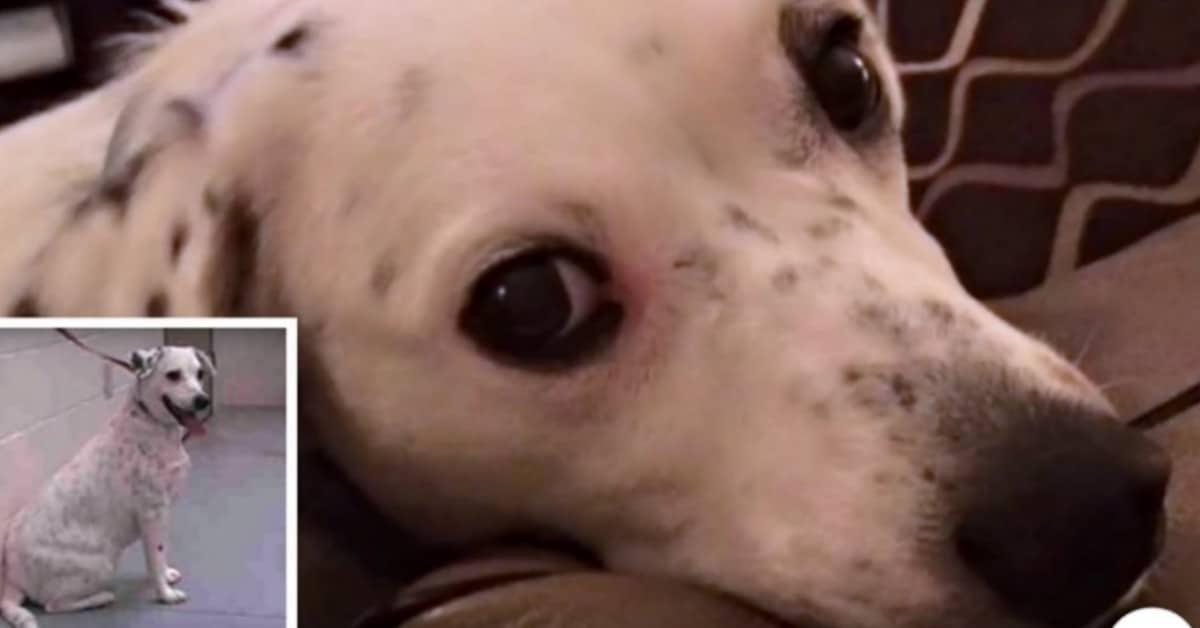 Jubliee, il cane riportato al rifugio perché troppo appiccicoso