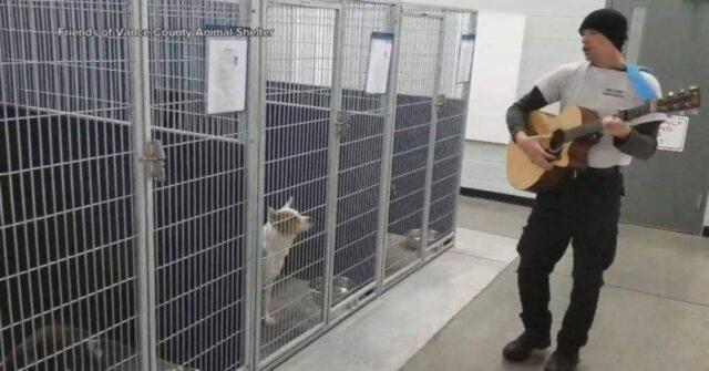 La-musicoterapia-di-Chad-per-i-cani-del-rifugio-che-ha-aiutato-anche-con-le-adozioni