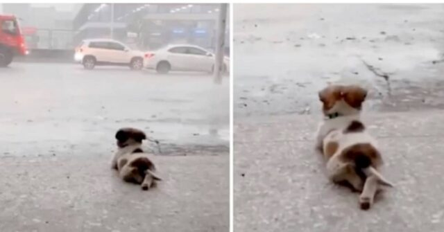 il-cucciolo-che-ama-la-pioggia-e-che-ha-stupito-il-mondo-del-web