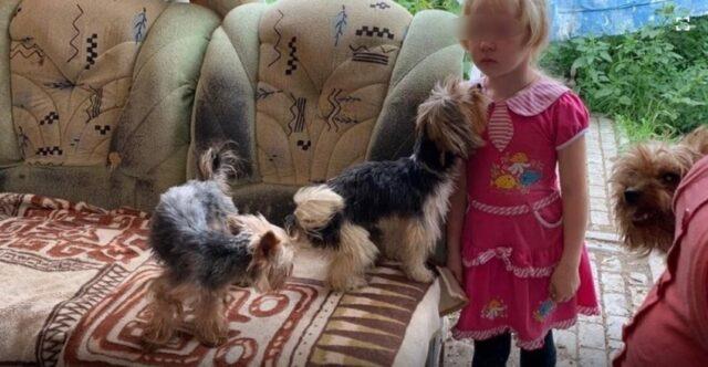 Bambina-cani