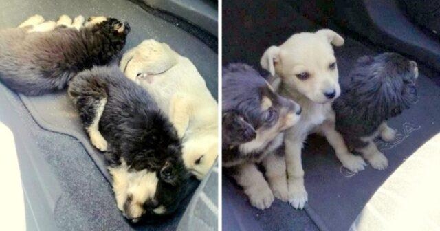 i-cuccioli-trovati-sul-ciglio-della-strada