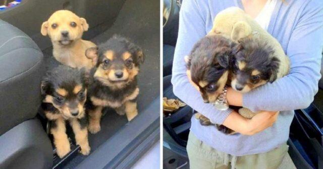 i-cuccioli-trovati-sul-ciglio-della-strada 1