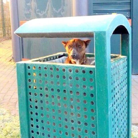 Scamp-il-cucciolo-abbandonato-nel-secchio-della-spazzatura