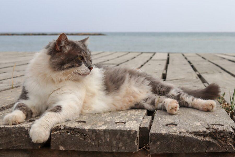 Come portare il gatto in vacanza