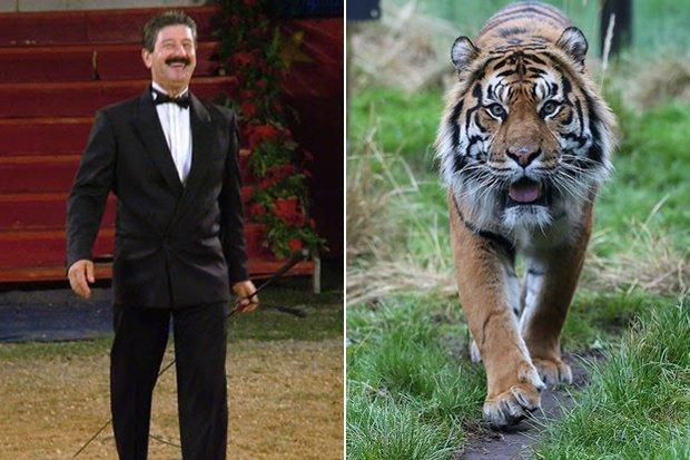 Ettore-Weber-tigre