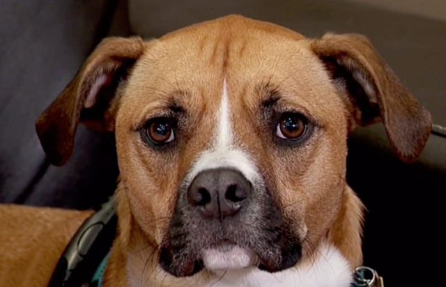 Zeke-il-cucciolo-che-ha-salvato-la-vita-alla-sua-amica-umana 1