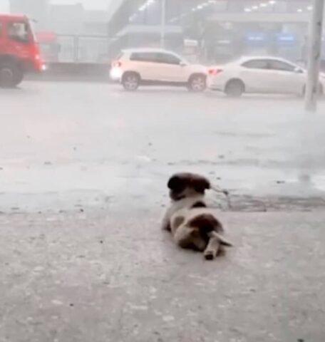 il-cucciolo-che-ama-la-pioggia