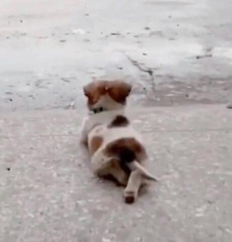 il-cucciolo-che-ama-la-pioggia 1