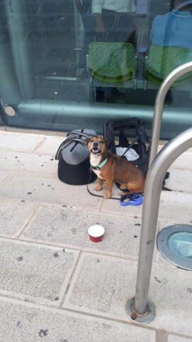 cane-aeroporto-brindisi