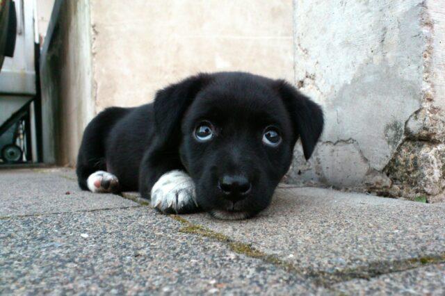cane-nero-e-bianco