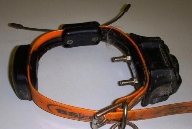 collare-elettrico