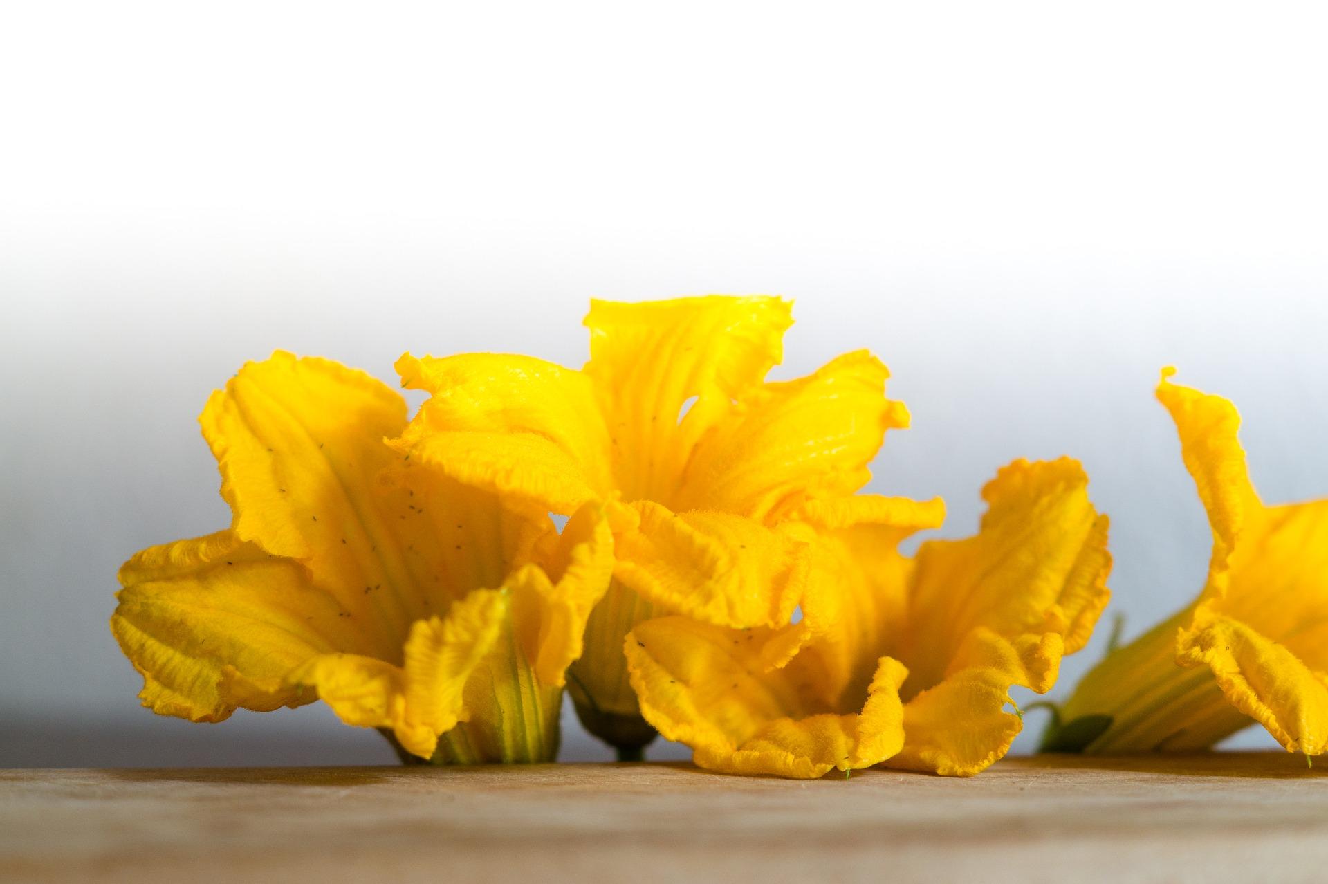 Come conservare i fiori di zucca