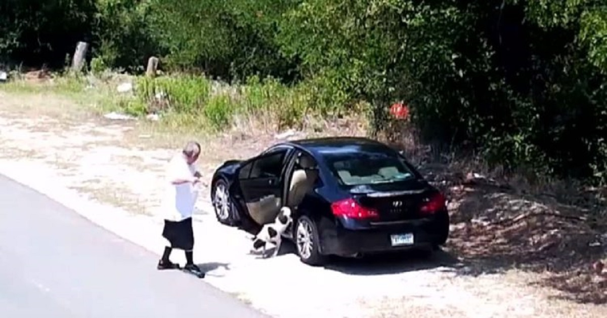 Telecamera di sicurezza riprende una discarica per cani