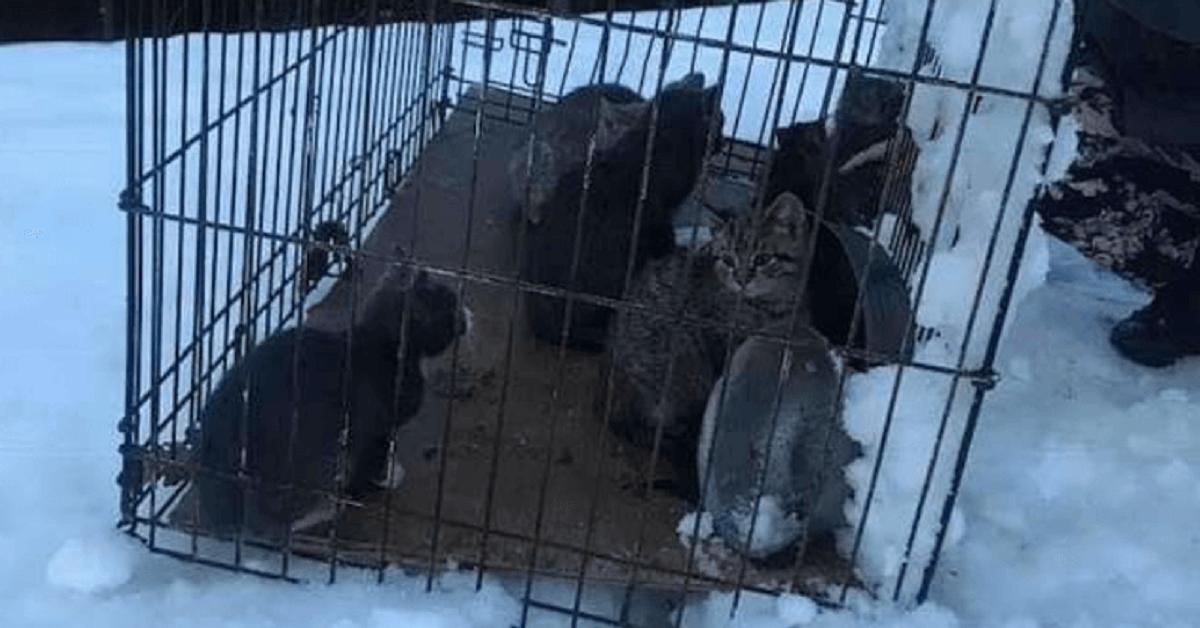 Gatti lasciati al freddo glaciale a morire congelati
