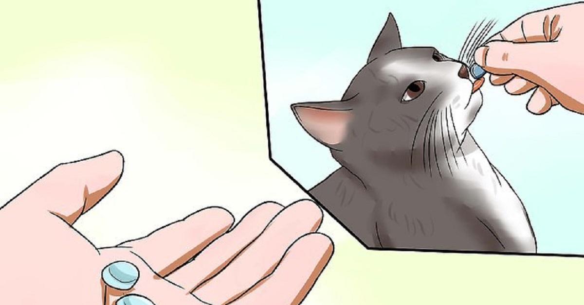 gatto-trattamento