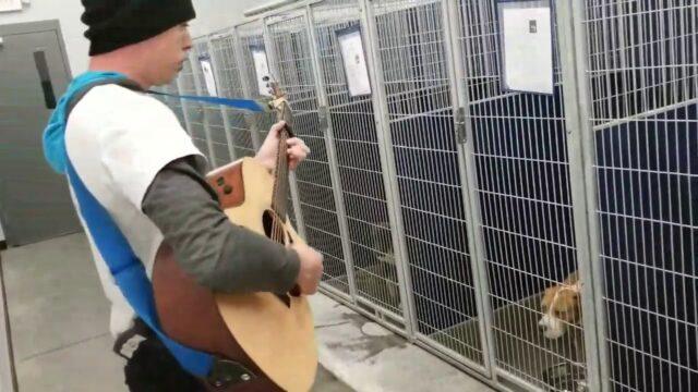La-musicoterapia-di-Chad-per-i-cani-del-rifugio