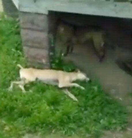 il-cane-trovato-in-fin-di-vita